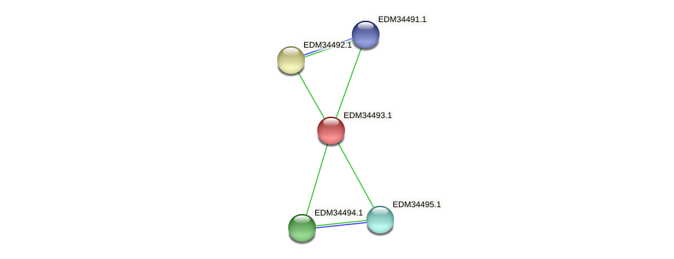 PBAL39_10865 protein (Pedobacter sp. BAL39) - STRING interaction network