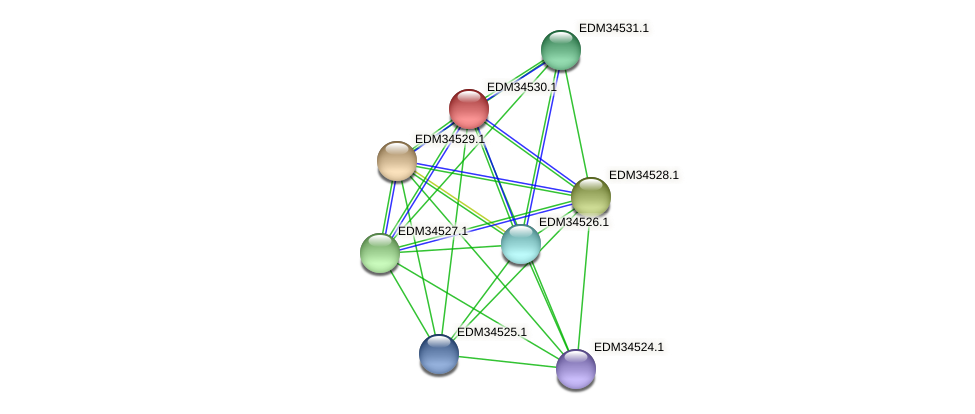 PBAL39_11050 protein (Pedobacter sp. BAL39) - STRING interaction network