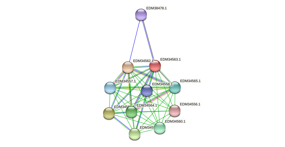 PBAL39_11215 protein (Pedobacter sp. BAL39) - STRING interaction network