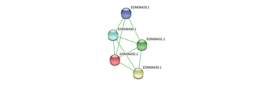 PBAL39_12027 protein (Pedobacter sp. BAL39) - STRING interaction network