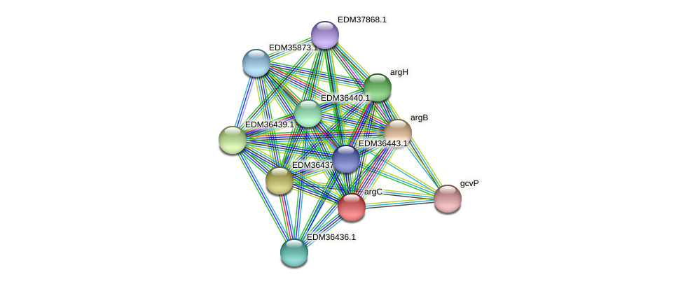 argC protein (Pedobacter sp. BAL39) - STRING interaction network