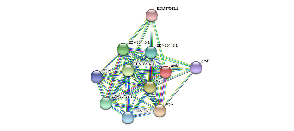 argB protein (Pedobacter sp. BAL39) - STRING interaction network