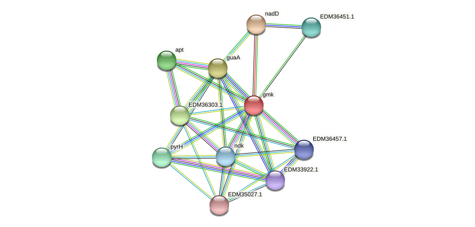 gmk protein (Pedobacter sp. BAL39) - STRING interaction network
