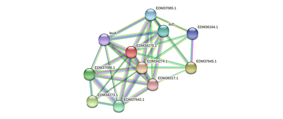 PBAL39_12443 protein (Pedobacter sp. BAL39) - STRING interaction network