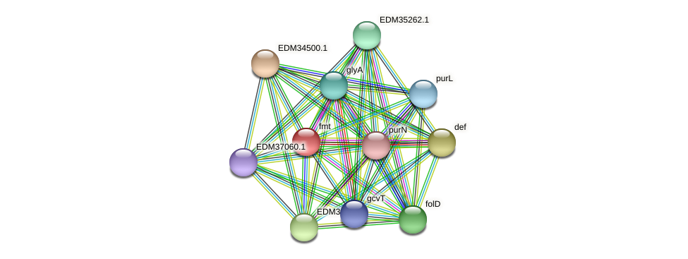 fmt protein (Pedobacter sp. BAL39) - STRING interaction network