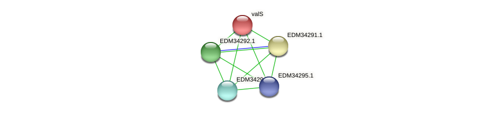 valS protein (Pedobacter sp. BAL39) - STRING interaction network