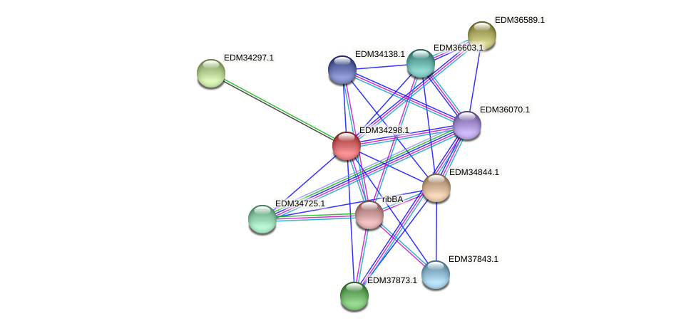 PBAL39_12558 protein (Pedobacter sp. BAL39) - STRING interaction network