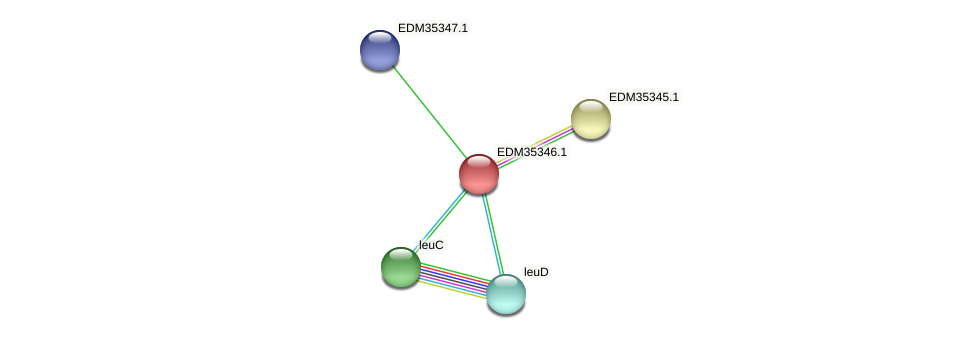 PBAL39_12790 protein (Pedobacter sp. BAL39) - STRING interaction network