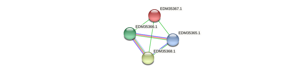 PBAL39_12895 protein (Pedobacter sp. BAL39) - STRING interaction network
