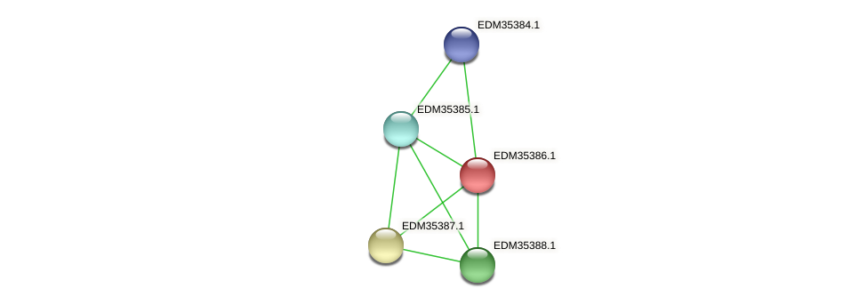 PBAL39_12990 protein (Pedobacter sp. BAL39) - STRING interaction network