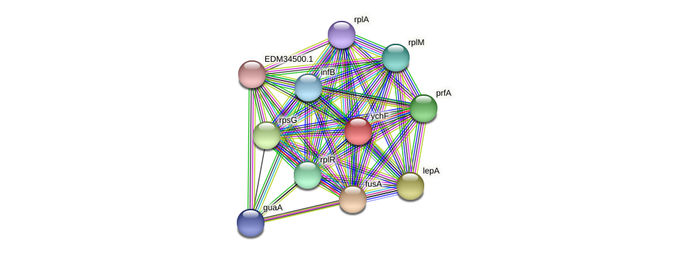 ychF protein (Pedobacter sp. BAL39) - STRING interaction network
