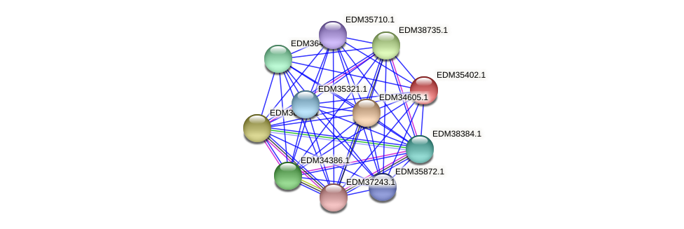PBAL39_13070 protein (Pedobacter sp. BAL39) - STRING interaction network