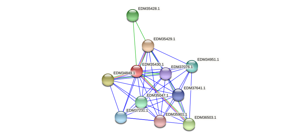 PBAL39_13210 protein (Pedobacter sp. BAL39) - STRING interaction network