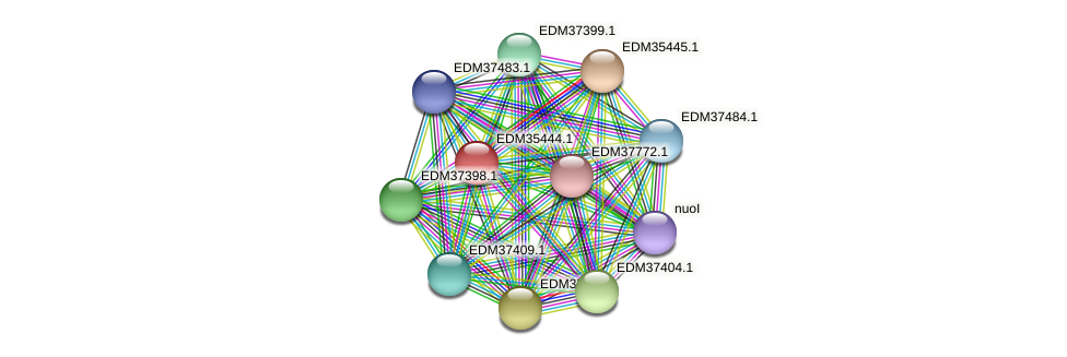 PBAL39_13280 protein (Pedobacter sp. BAL39) - STRING interaction network