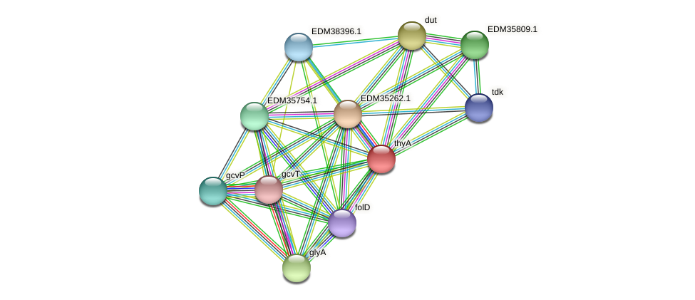 thyA protein (Pedobacter sp. BAL39) - STRING interaction network