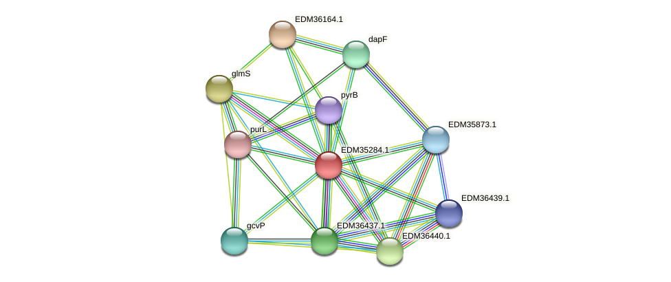 PBAL39_13667 protein (Pedobacter sp. BAL39) - STRING interaction network