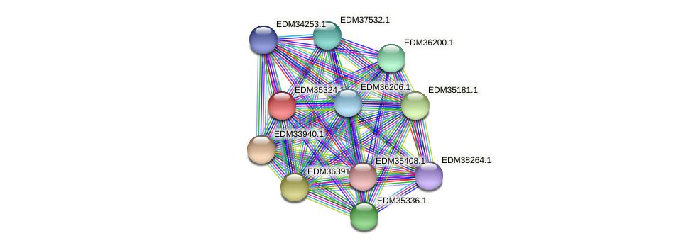 PBAL39_13867 protein (Pedobacter sp. BAL39) - STRING interaction network
