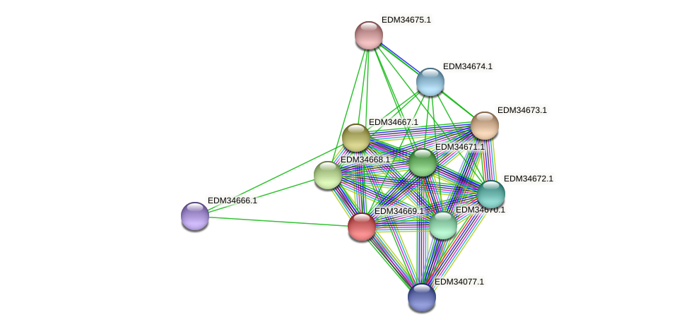 PBAL39_13969 protein (Pedobacter sp. BAL39) - STRING interaction network
