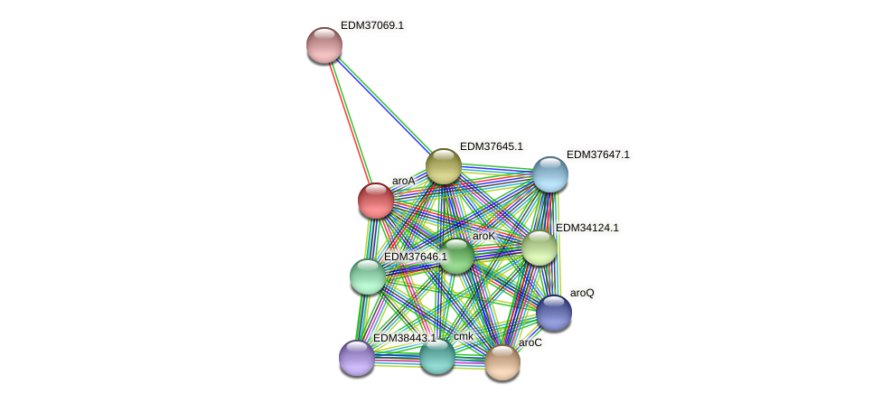 aroA protein (Pedobacter sp. BAL39) - STRING interaction network