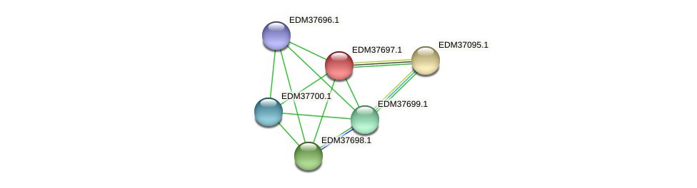 EDM37697.1 protein (Pedobacter sp. BAL39) - STRING interaction network