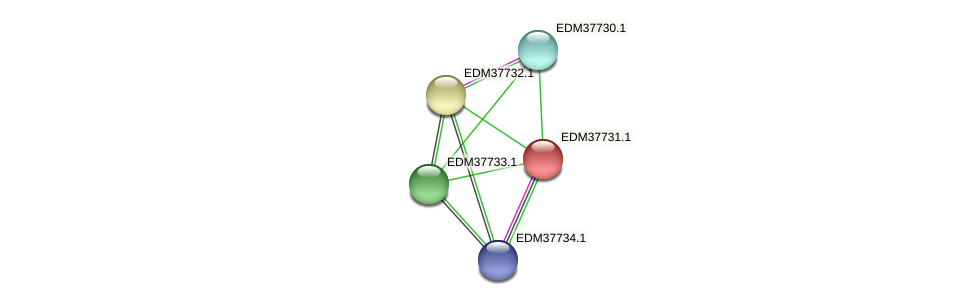 PBAL39_14939 protein (Pedobacter sp. BAL39) - STRING interaction network