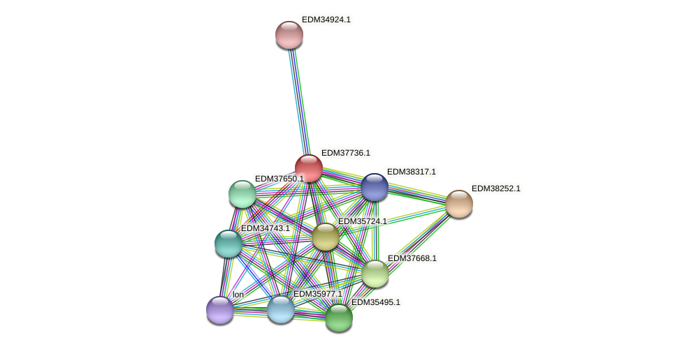 PBAL39_14964 protein (Pedobacter sp. BAL39) - STRING interaction network