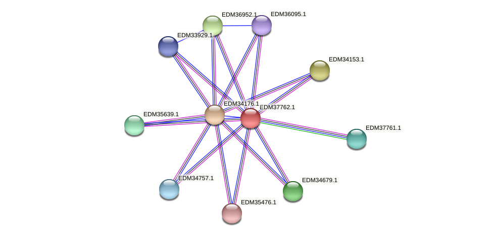PBAL39_15094 protein (Pedobacter sp. BAL39) - STRING interaction network