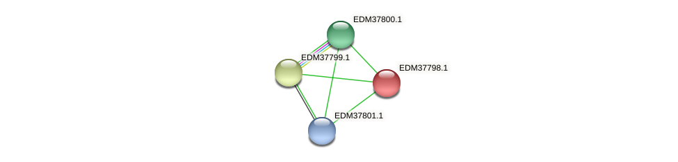 PBAL39_15274 protein (Pedobacter sp. BAL39) - STRING interaction network