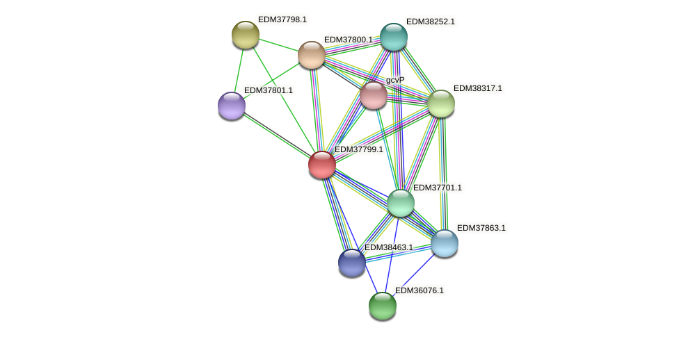 PBAL39_15279 protein (Pedobacter sp. BAL39) - STRING interaction network