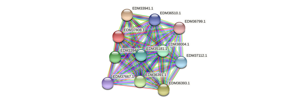 PBAL39_15324 protein (Pedobacter sp. BAL39) - STRING interaction network