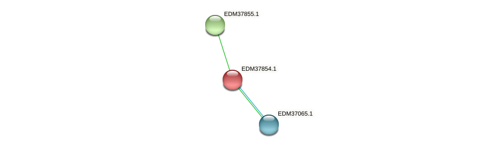 PBAL39_15554 protein (Pedobacter sp. BAL39) - STRING interaction network