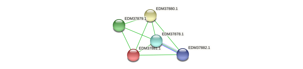 PBAL39_15689 protein (Pedobacter sp. BAL39) - STRING interaction network