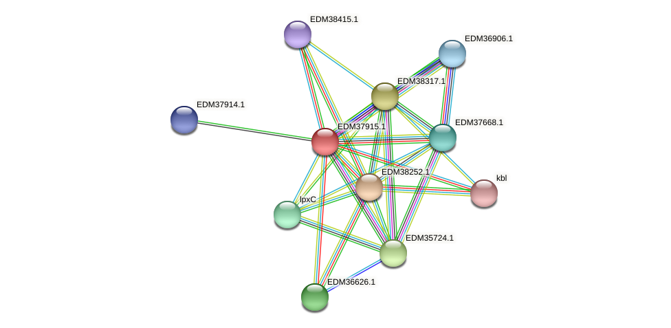 PBAL39_15859 protein (Pedobacter sp. BAL39) - STRING interaction network