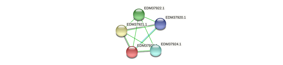 PBAL39_15899 protein (Pedobacter sp. BAL39) - STRING interaction network