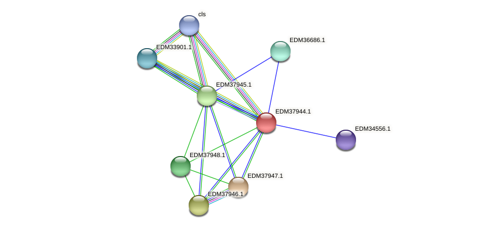 PBAL39_16004 protein (Pedobacter sp. BAL39) - STRING interaction network