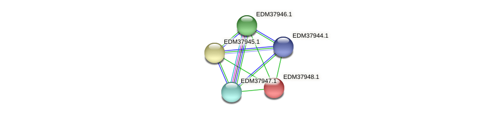 PBAL39_16024 protein (Pedobacter sp. BAL39) - STRING interaction network