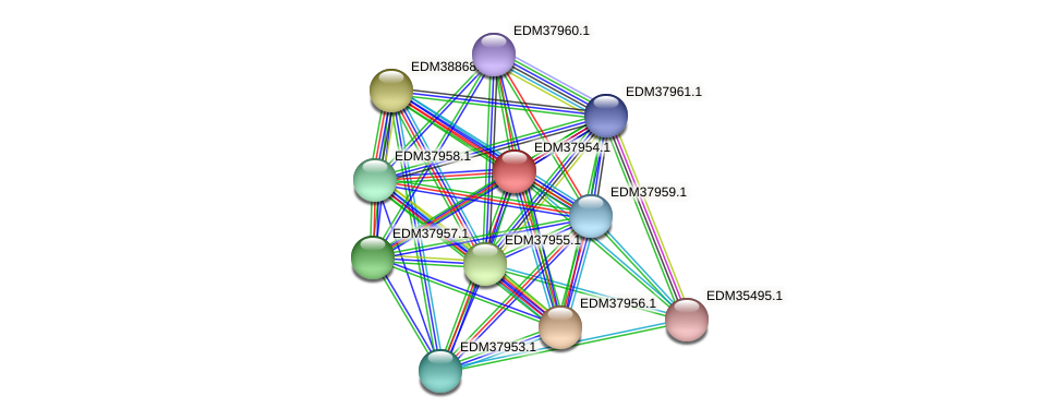 PBAL39_16054 protein (Pedobacter sp. BAL39) - STRING interaction network