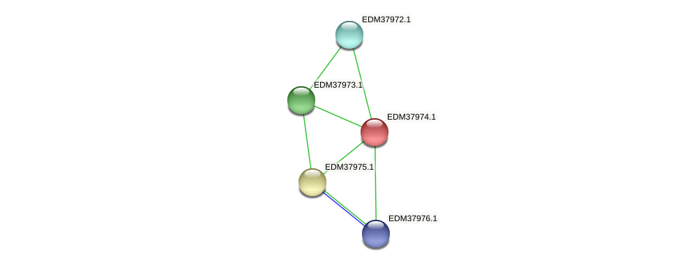 PBAL39_16154 protein (Pedobacter sp. BAL39) - STRING interaction network