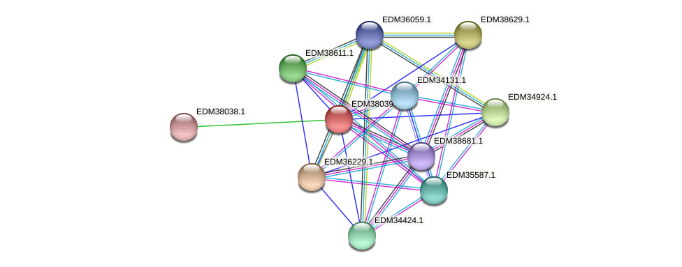 PBAL39_16479 protein (Pedobacter sp. BAL39) - STRING interaction network