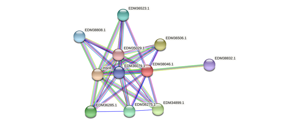 PBAL39_16514 protein (Pedobacter sp. BAL39) - STRING interaction network