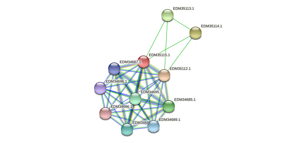 PBAL39_16576 protein (Pedobacter sp. BAL39) - STRING interaction network