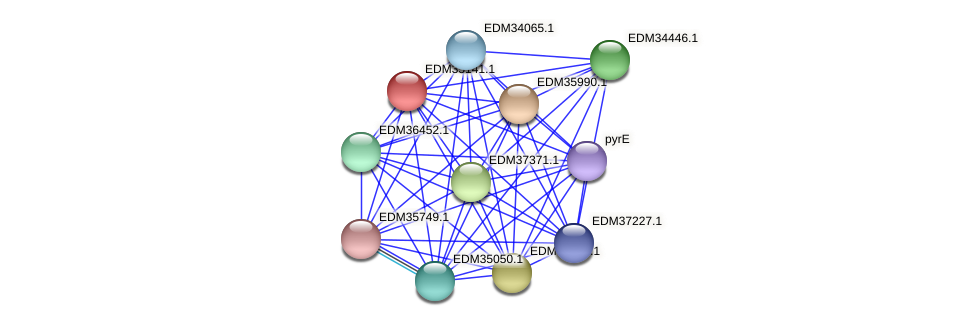 PBAL39_16706 protein (Pedobacter sp. BAL39) - STRING interaction network