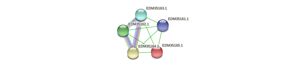 PBAL39_16826 protein (Pedobacter sp. BAL39) - STRING interaction network