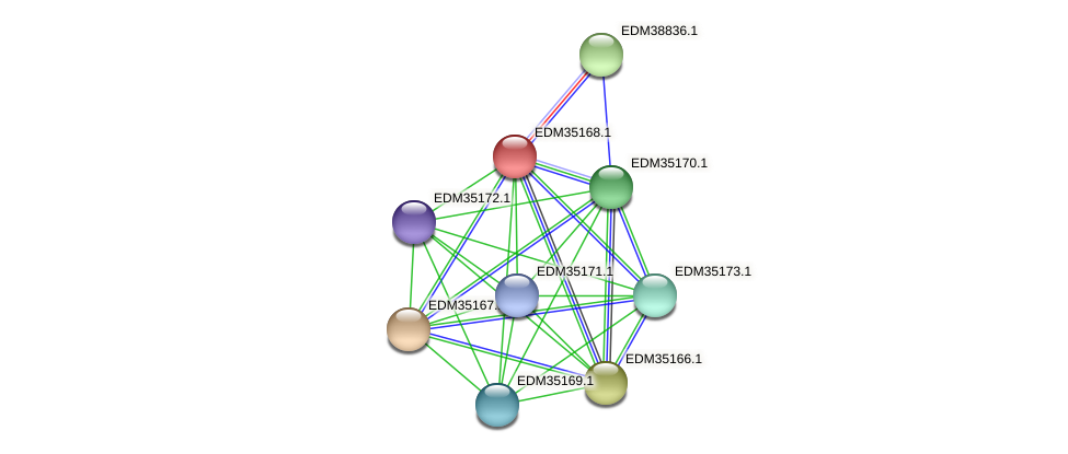 PBAL39_16841 protein (Pedobacter sp. BAL39) - STRING interaction network