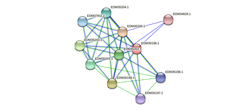 PBAL39_16991 protein (Pedobacter sp. BAL39) - STRING interaction network