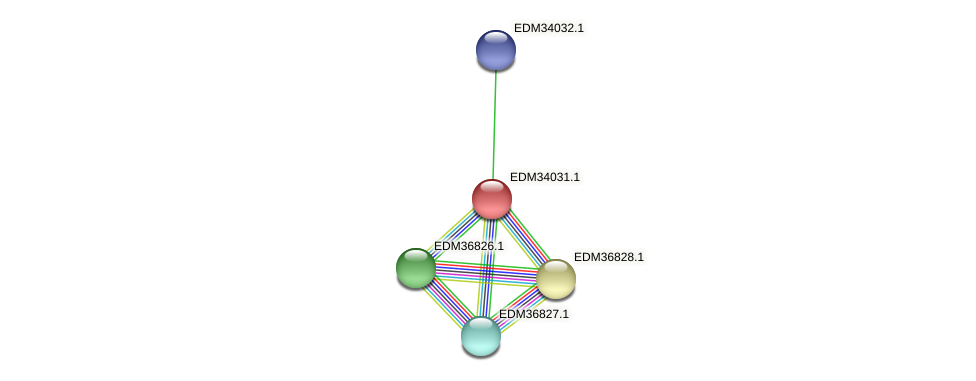 PBAL39_17209 protein (Pedobacter sp. BAL39) - STRING interaction network