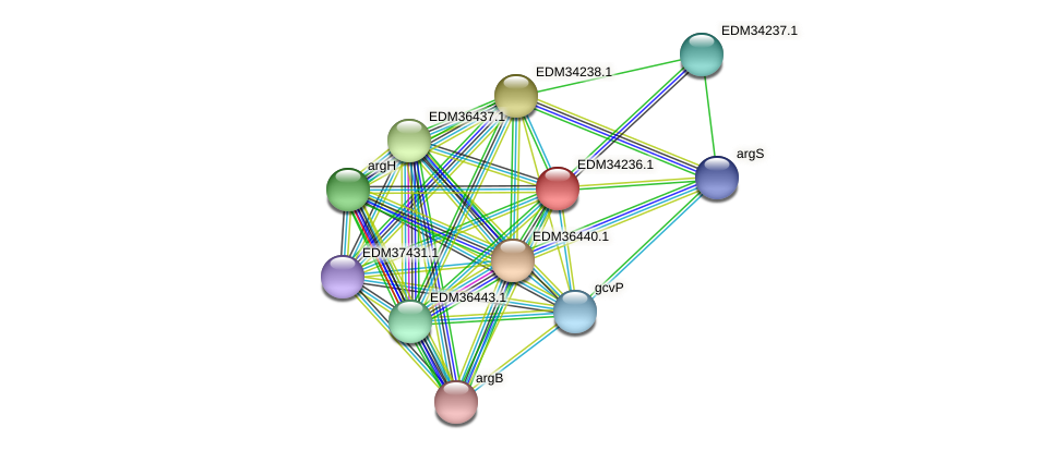 PBAL39_17414 protein (Pedobacter sp. BAL39) - STRING interaction network