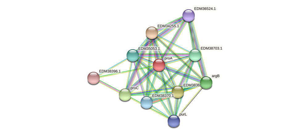 proA protein (Pedobacter sp. BAL39) - STRING interaction network
