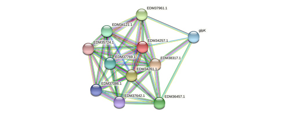 PBAL39_17519 protein (Pedobacter sp. BAL39) - STRING interaction network