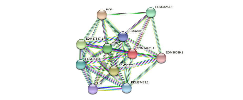 PBAL39_17539 protein (Pedobacter sp. BAL39) - STRING interaction network